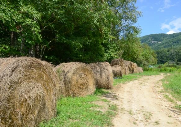 Farm 4